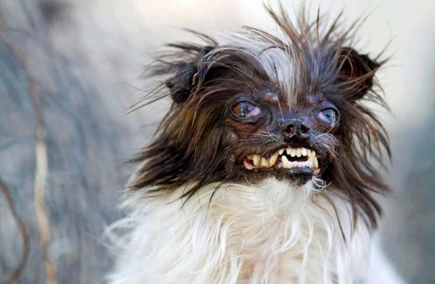 Maho Doggie