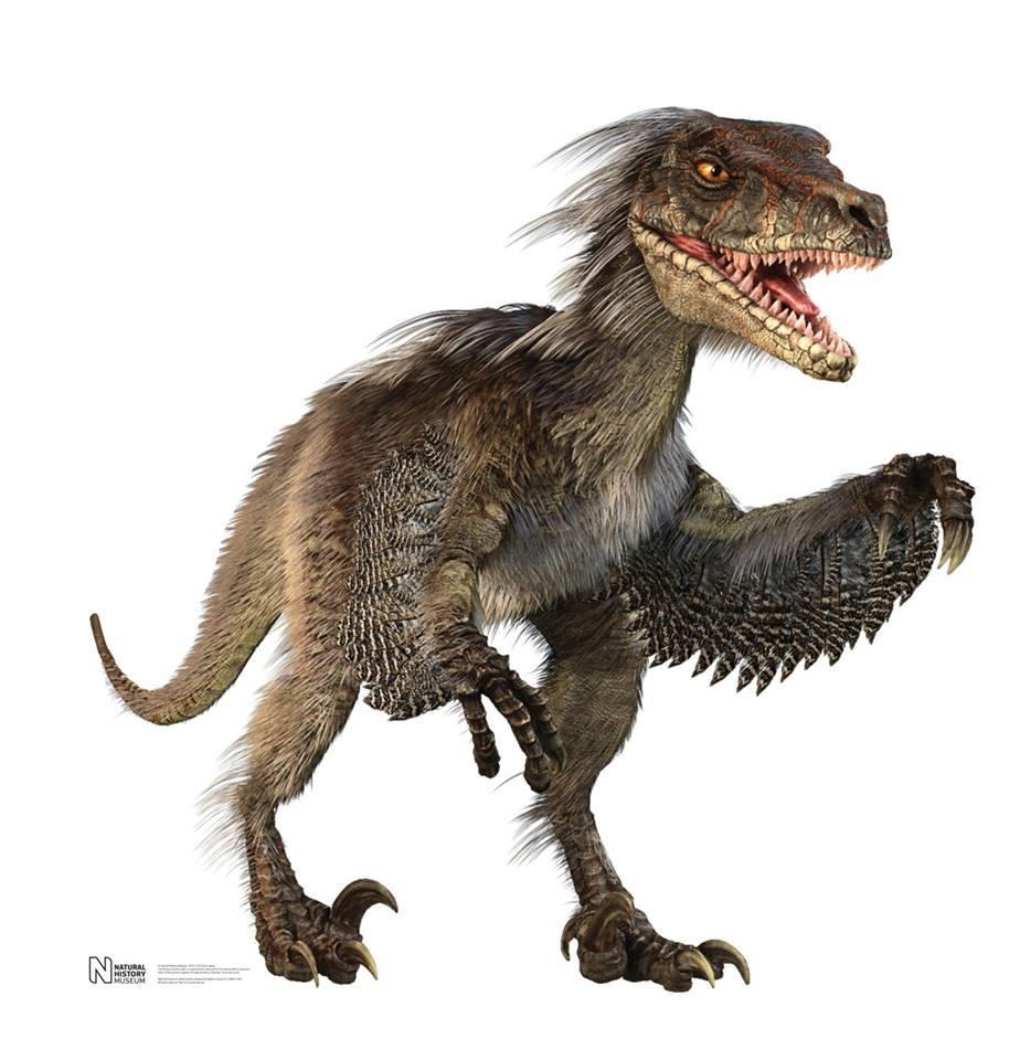Jill the Dinosaur