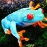 Psycho(delic) Frog