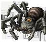 Araignée de l'ombre