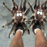Slippers of Spider Climbing