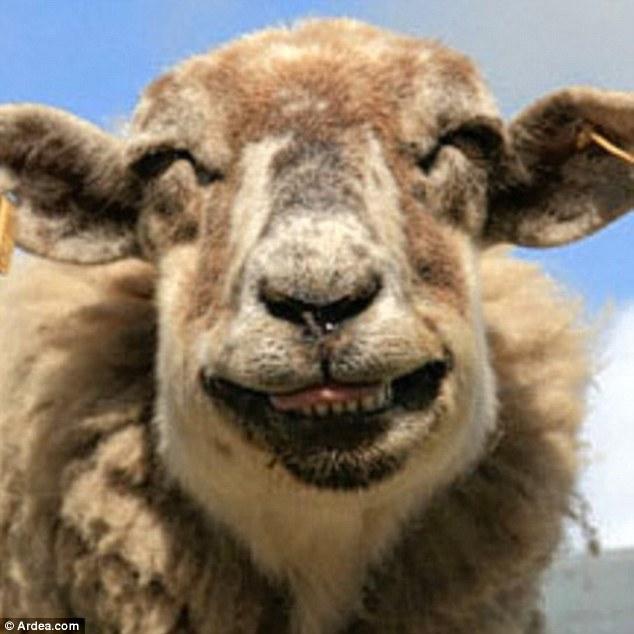 Creepy Sheepies
