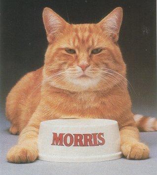 Captain Morris