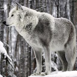 Wolf The Puppy