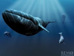 godwhales
