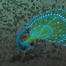 Irisfowls