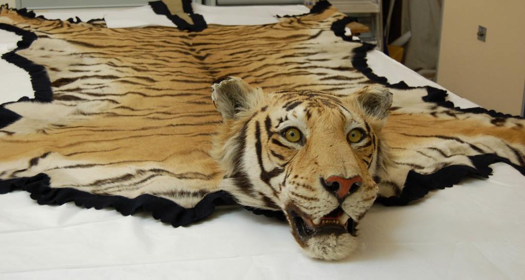 Tiger Skin Rug (Rug Fiend)