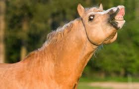 THE HORSE WE ATE