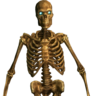 Booker's Artificial Skeleton