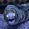 Friendly Eel