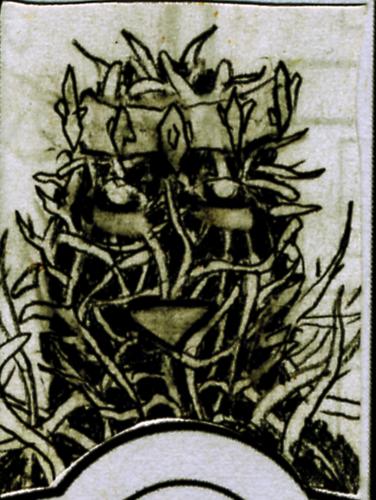 Explosion Cactus