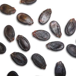 The Seeds of Midas