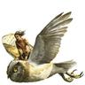 Owl Riders