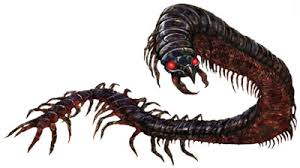 Centipede Giant
