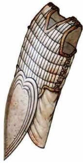 Akhentepi's Armor