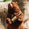 Whiskey Drinking Bear