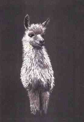 Emmon the Llama