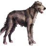 Andruil (Dog)
