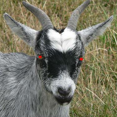 Fenharel (Goat)