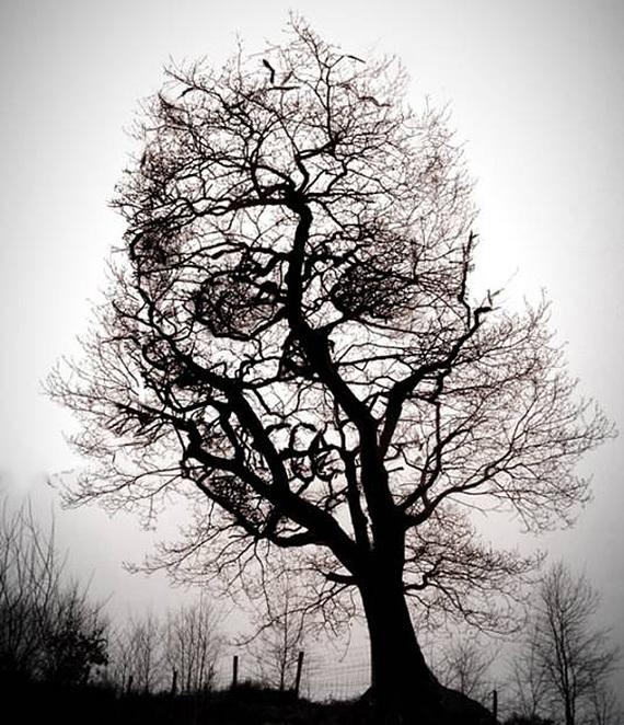 Hiri Huf Anghu, the Nemesis Tree