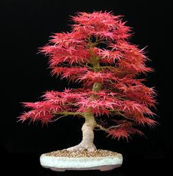 angery bonzie tree
