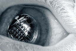 "Cybernetic Eyes ""Vigilant"""