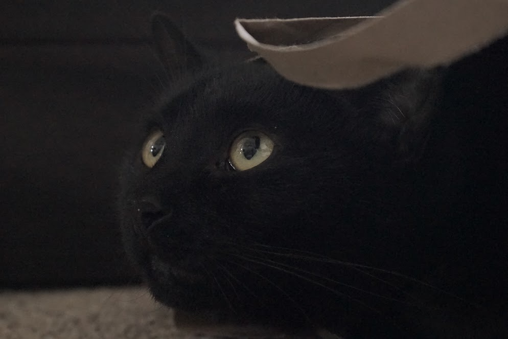 Grimm the Black Cat