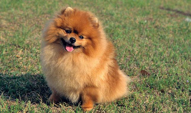 Trixie aka Good Dog