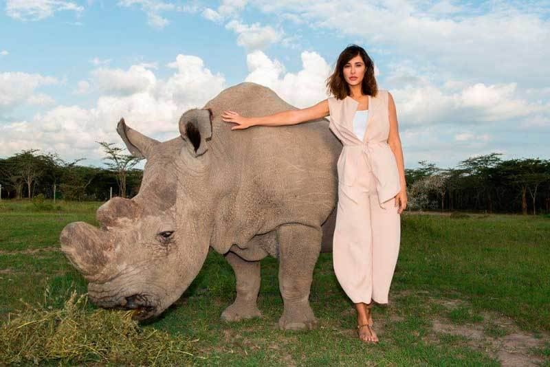 President Rhino