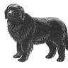 Ivan der Hund