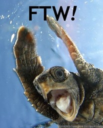 Hippogriff seeking turtle