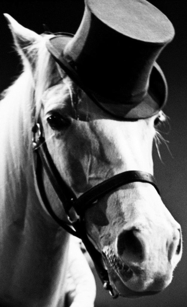 Pferdinand