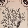 Hibernius Waicox