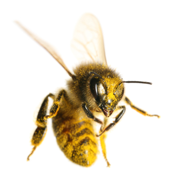 Auntie Bee