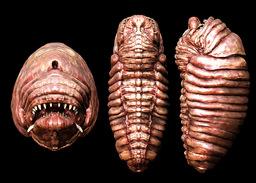 Psycharus Worm