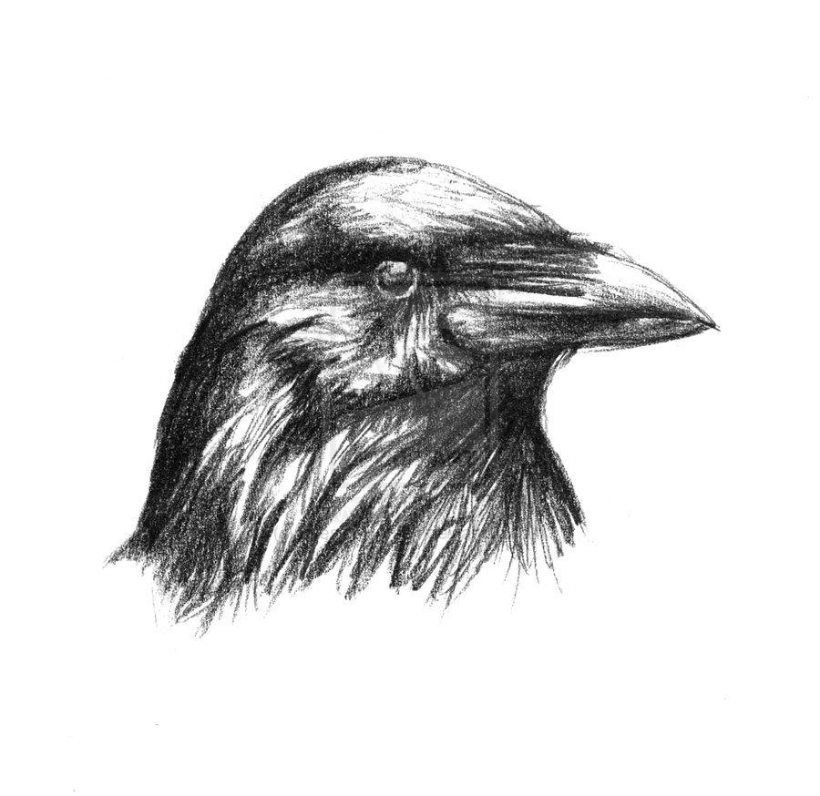 Crow 3, aka Xavfalcon