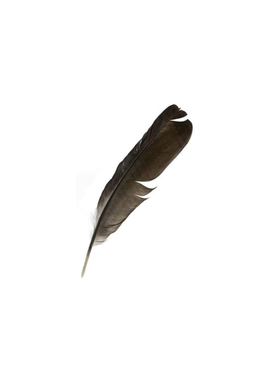 Medicine Feathers