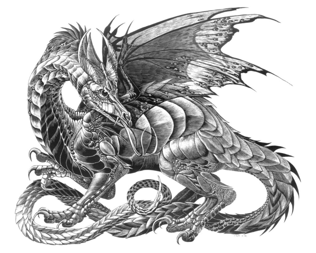 Niadhogr Longtail