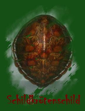 05. Schild aus Schnappschildkrötenpanzer