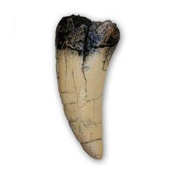 Tooth of At-Ta-Ir