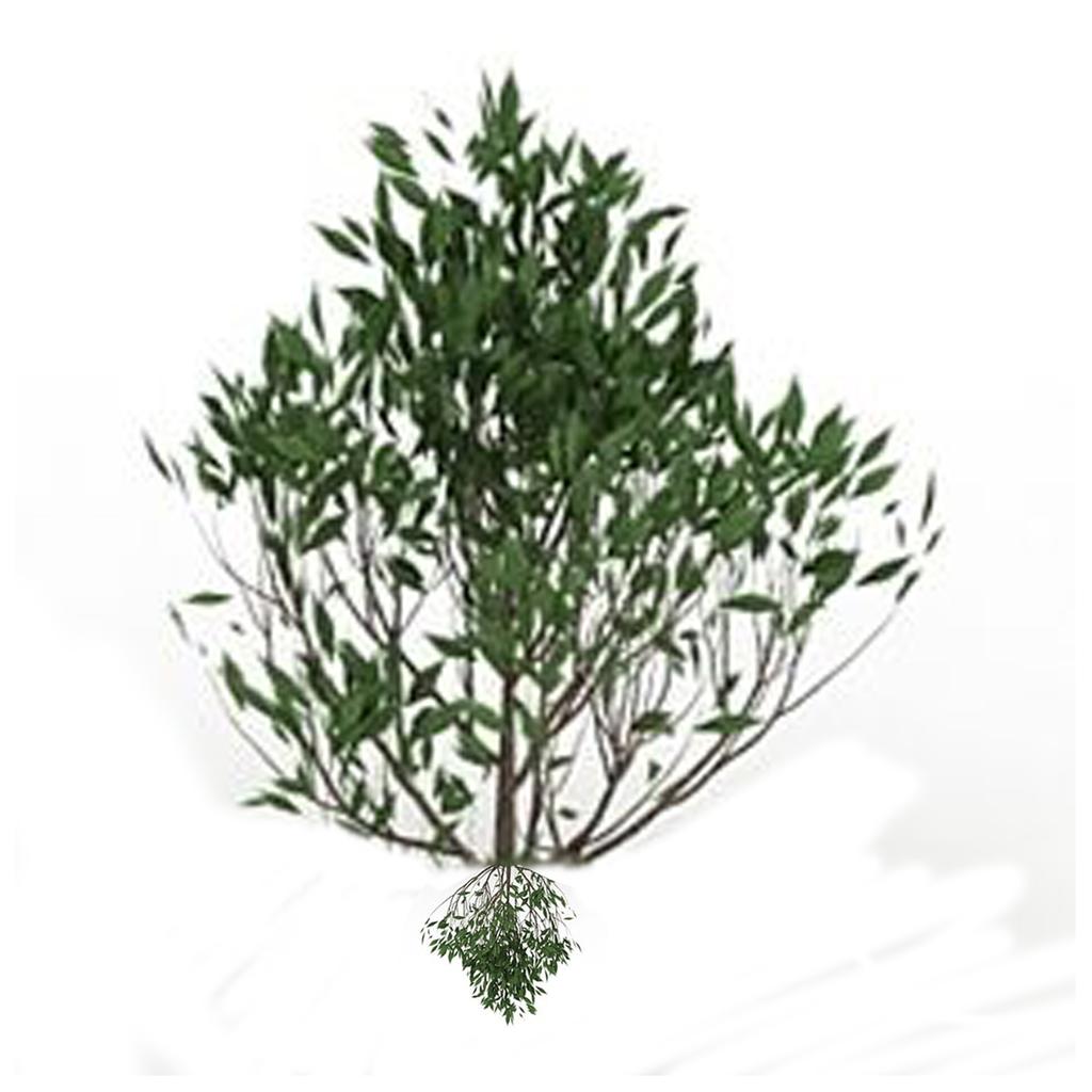 Camellia (sentient shrub)