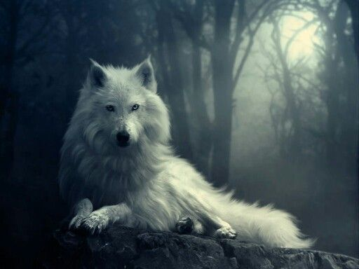 Dox, the Wolf
