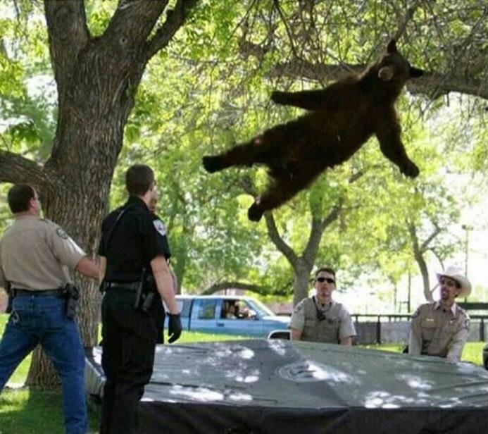 Drop-Bear