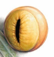 Moran's Eye