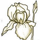 Golden Iris