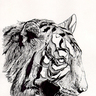H!jynx's Cybtertooth Tiger