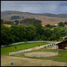 Thoroughbred Horse Farm