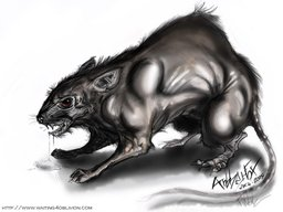 Animal-Giant-Rat