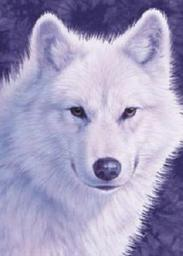 Masquerade the White Wolf