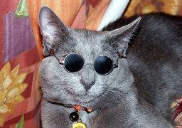 """Kataris """"Kat"""" ir'Ranek"""